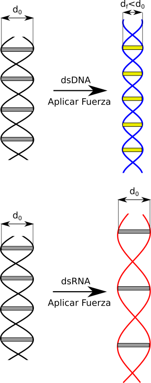 yy_DNA_RNA_Fuerza.png